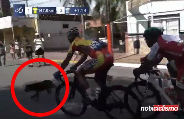Perro causa la caída de varios ciclistas en la segunda etapa de la Vuelta a San Juan