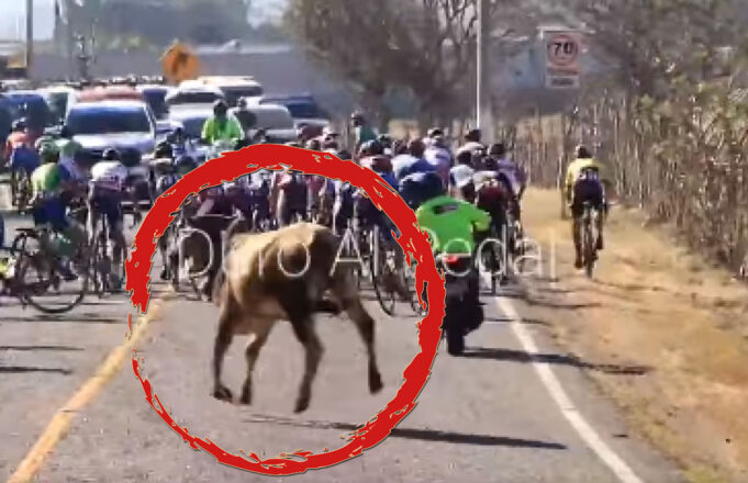 Toro persigue a ciclistas en el Tour por La Paz de Guatemala
